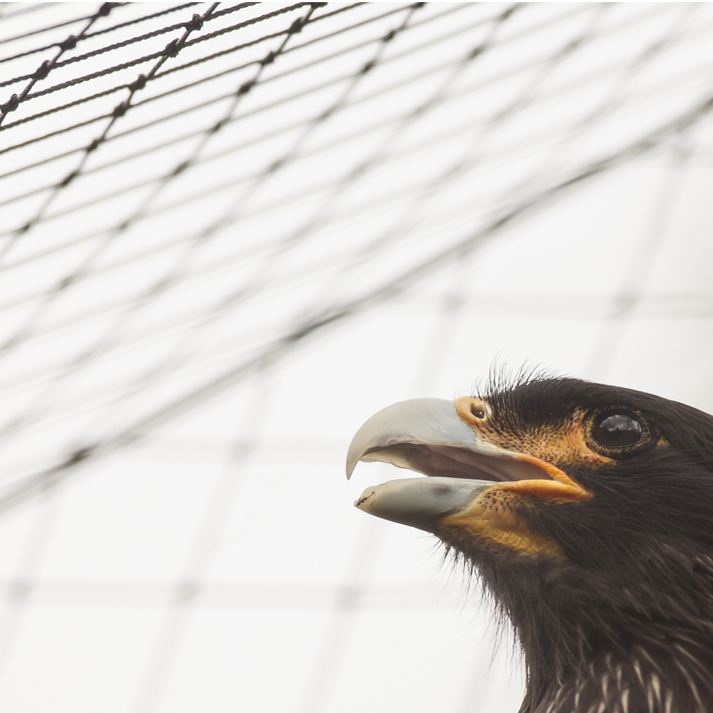 Aviary Netting & wire by Quin Sports and Nets