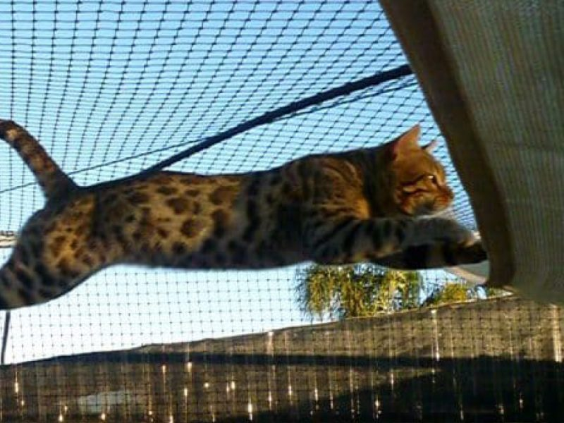 Cat Netting & enclosure by Quin Sports and Nets