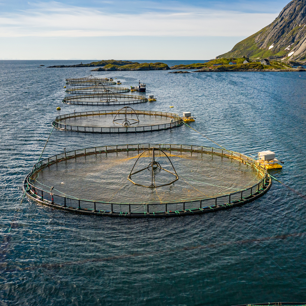 Aquaculture cage nets by Quin Sports and Nets