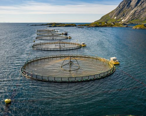 Marine Nets & Fish Cages