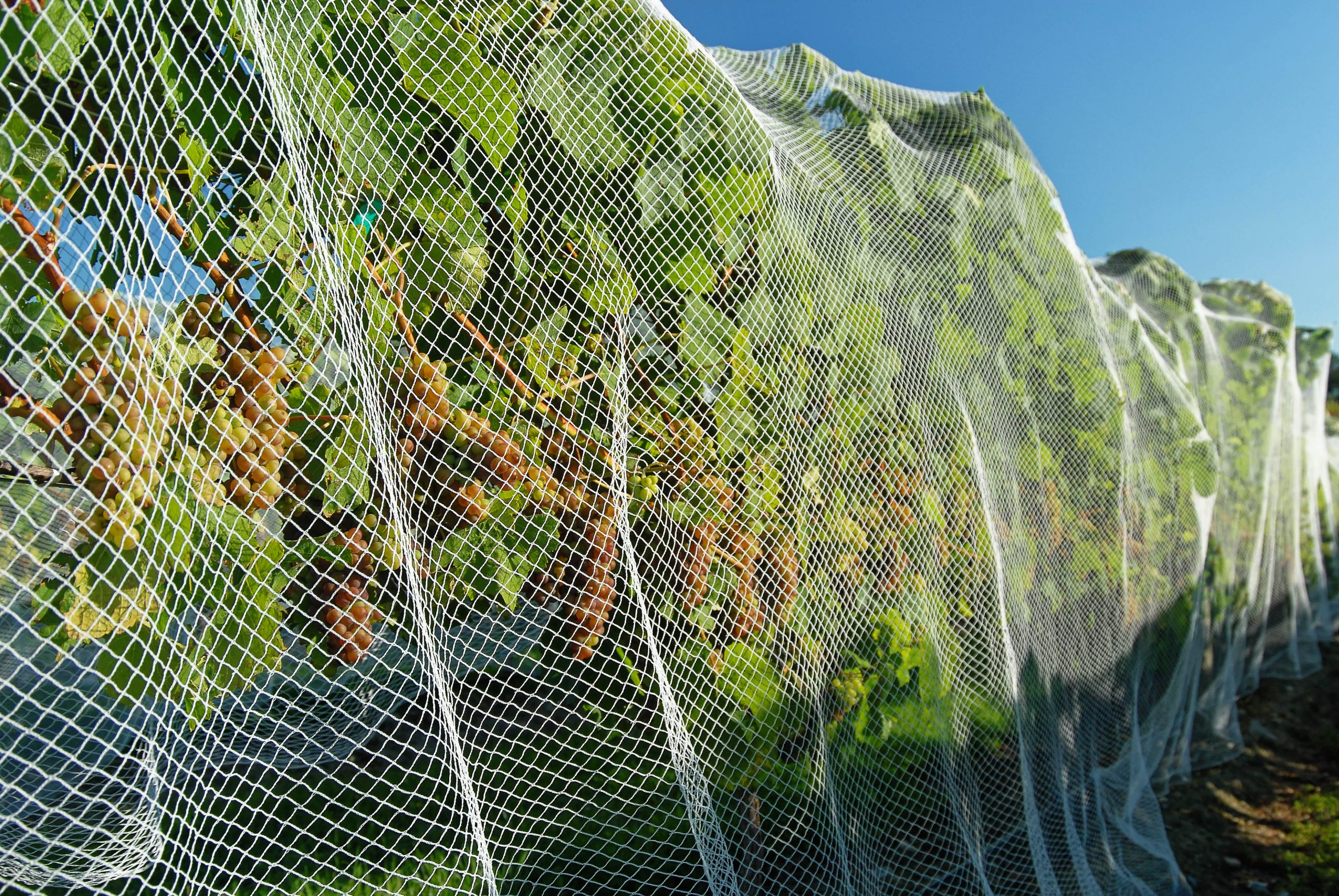 Horticulture and Agriculture netting by Quins Sports